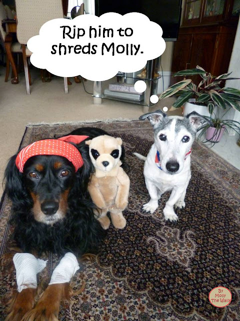 Molly The Wally & The Minging Meerkat!