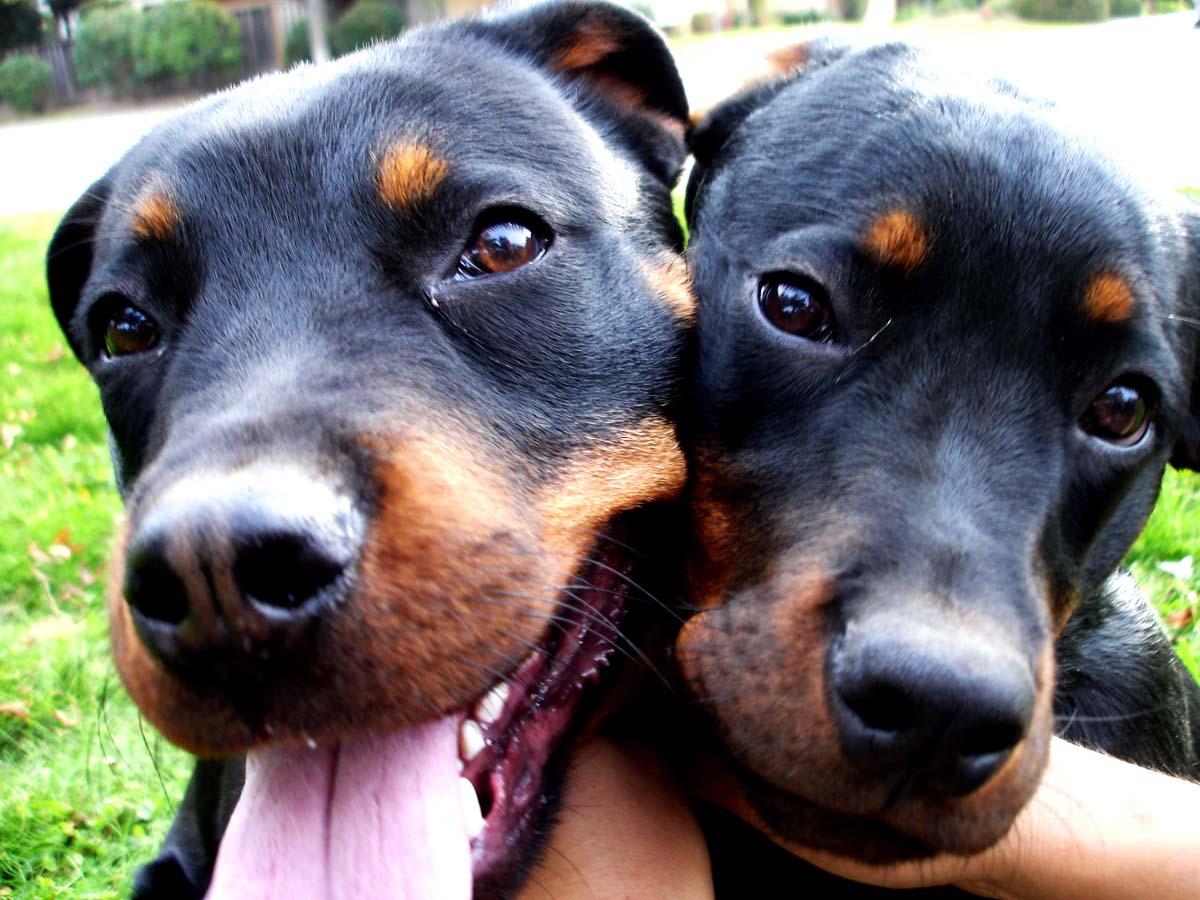 http://3.bp.blogspot.com/-0_12PULrzaY/TYs5LWjg31I/AAAAAAAAEV4/Tpd0IcnMANA/s1600/dogs.jpg