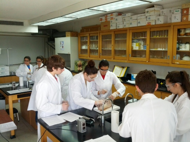 Image Width   Height   Version also Lab Photo moreover Image Width   Height   Version besides Heart System Template as well Time Languages English Fb. on high school biology worksheets online