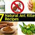 7 Natural Ant Killer Recipes