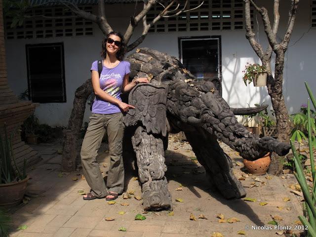 Elephants ChiangMai