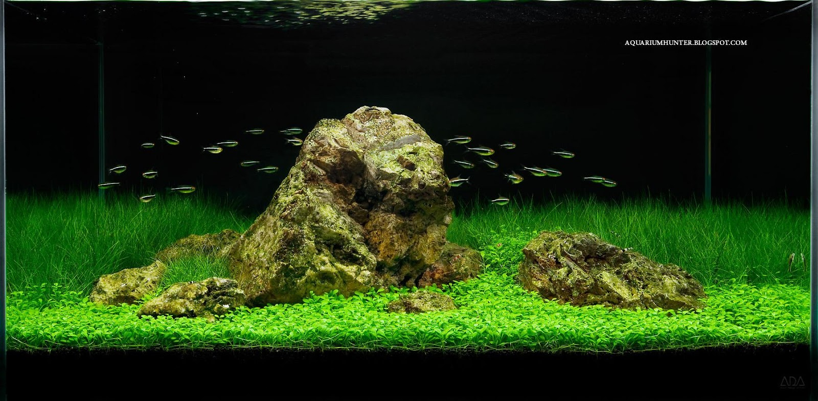Fishes Amp Aquariums Fish Tank Setups Aquascaping Another Simple Yet Beautiful Aquarium Living