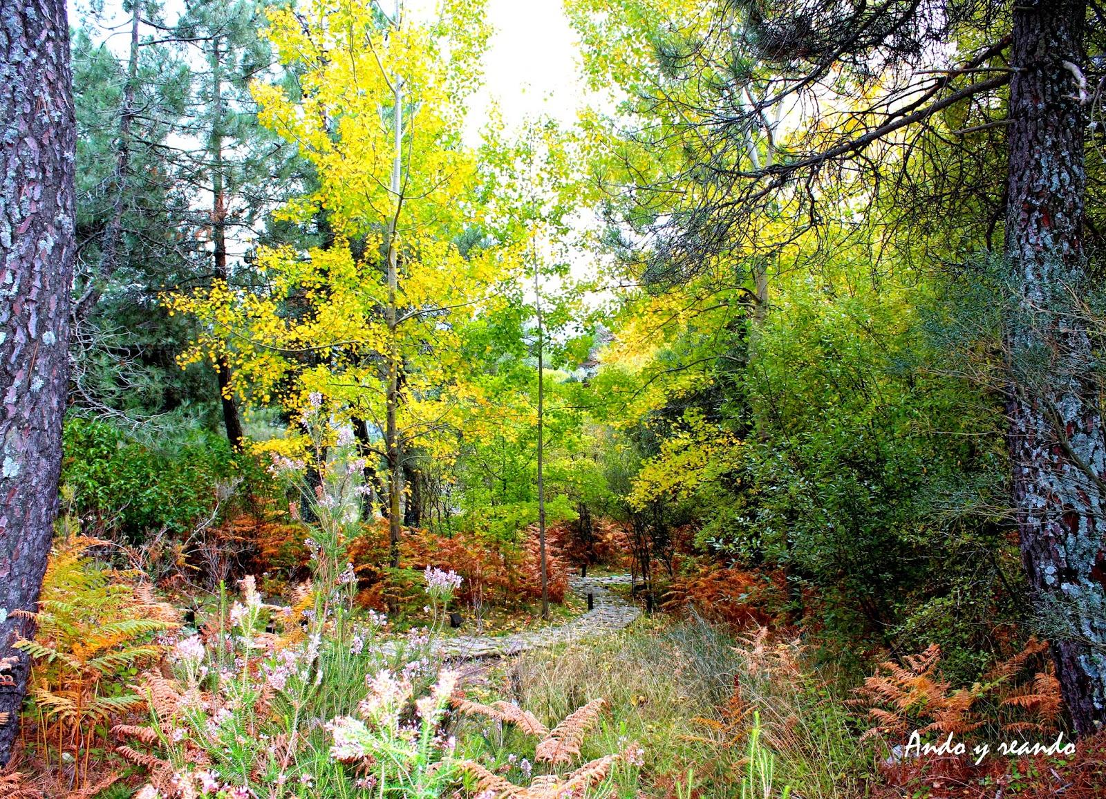 Otoño en el Arboreto de Luis Ceballos
