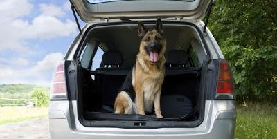 En el auto, ¿cómo llevar a tu mascota? Perro-mascota-viaje-auto-vacaciones-getty_MUJIMA20130108_0016_31