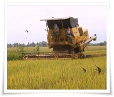 ragam pekerjaan di indonesia