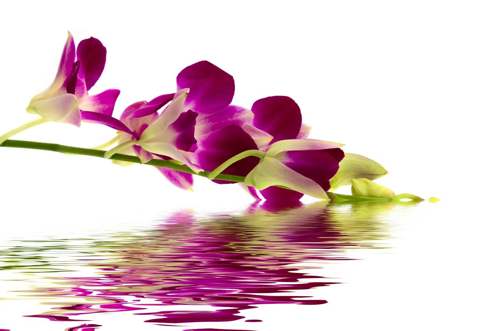 Fotos de Orquídeas Gratis