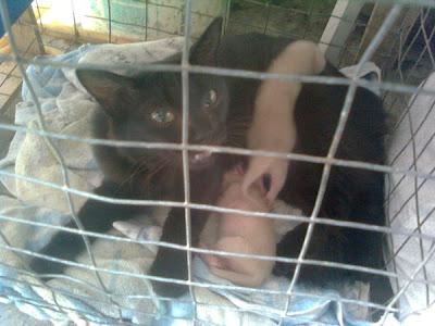 gambar kucing melahirkan anak, anak kucing