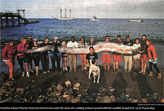 New Page Books: Creature of the Month The Sinuous Sea ... Oarfish 56 Ft