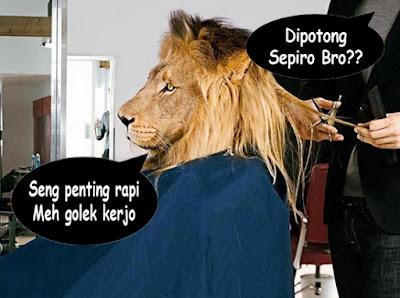 foto motong rambut singa lucu