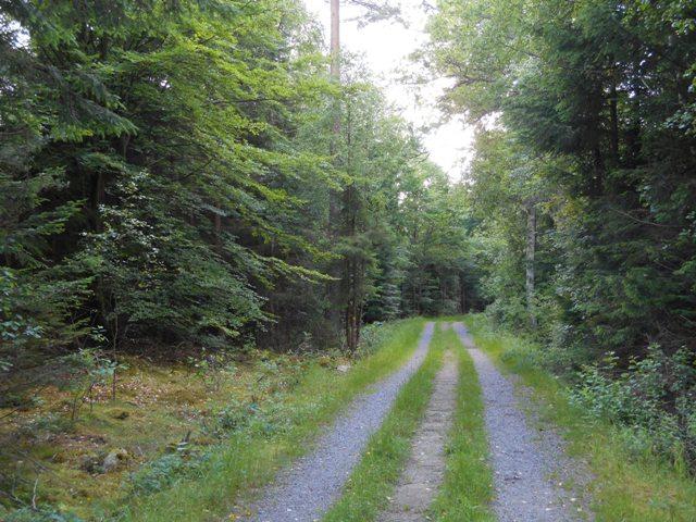 Mountainbike in bosco