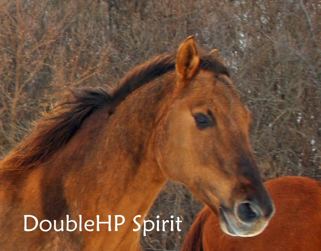 Spirit is our featured rescue horse for April 2014