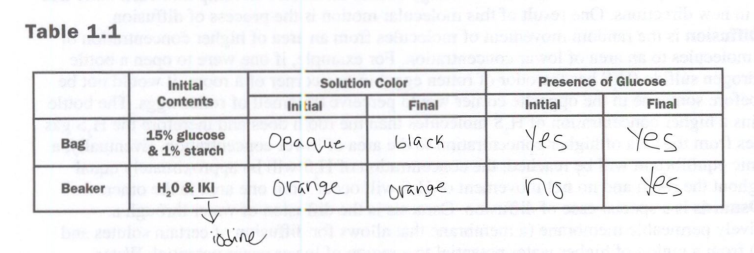 ap bio diffusion osmosis essay