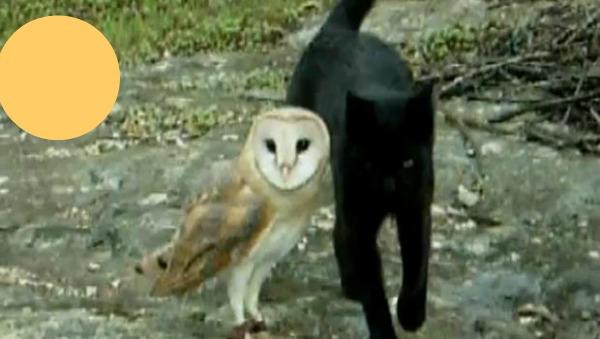 OWL + PUSSYCAT