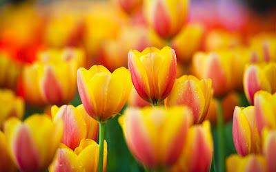 Imagenes de flores para el Dia de las Madres - 10 de Mayo
