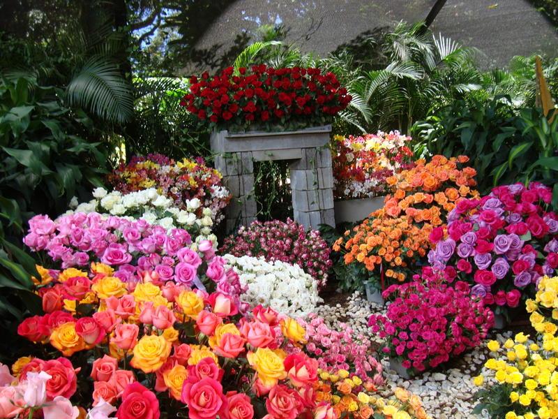 Fotos De Flores Colombianas - Asociación Colombiana De Exportadores De Flores