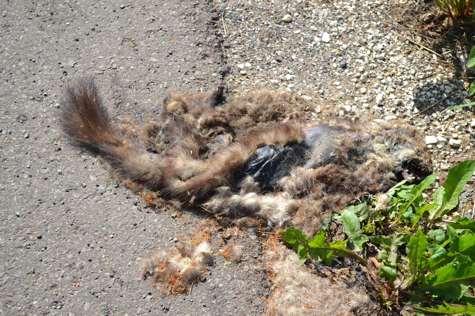 Roadkill Animals