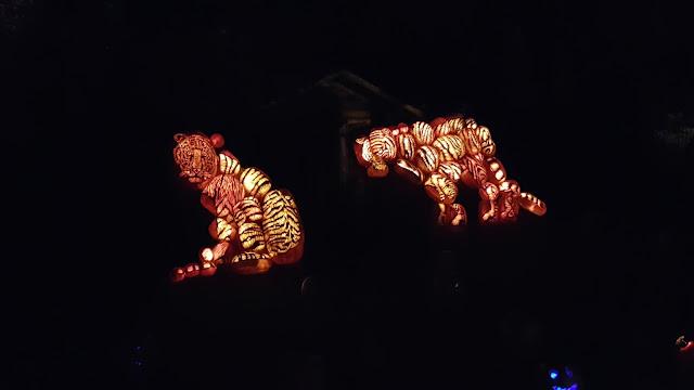 Tiger Jack O'Lanterns
