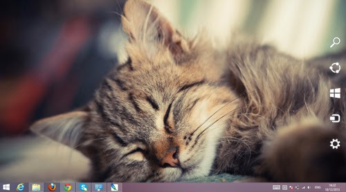 Sleepy Cat Theme For Windows 7 And 8 8.1