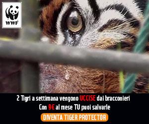 DIVENTA TIGER PROTECTOR (Clicca sull'immagine)