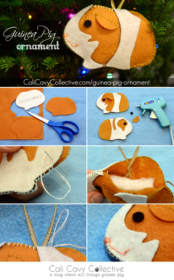 Cali Cavy Collective: a blog about all things guinea pig: Guinea Pig ...