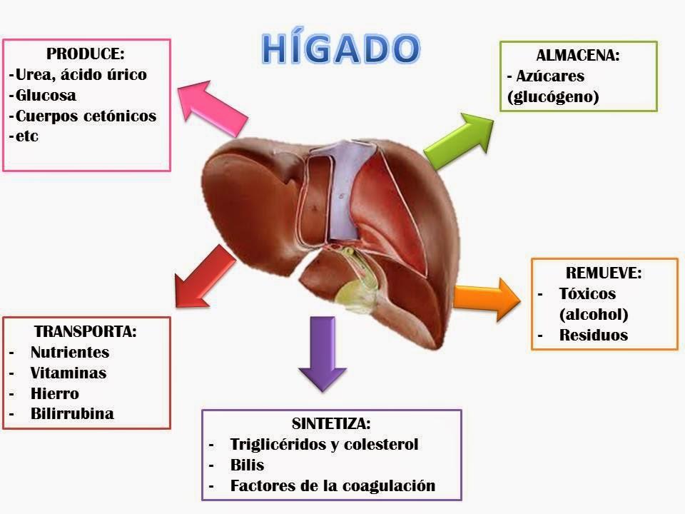 Nuevos Arquetipos: Virgo y los trastornos del Hígado