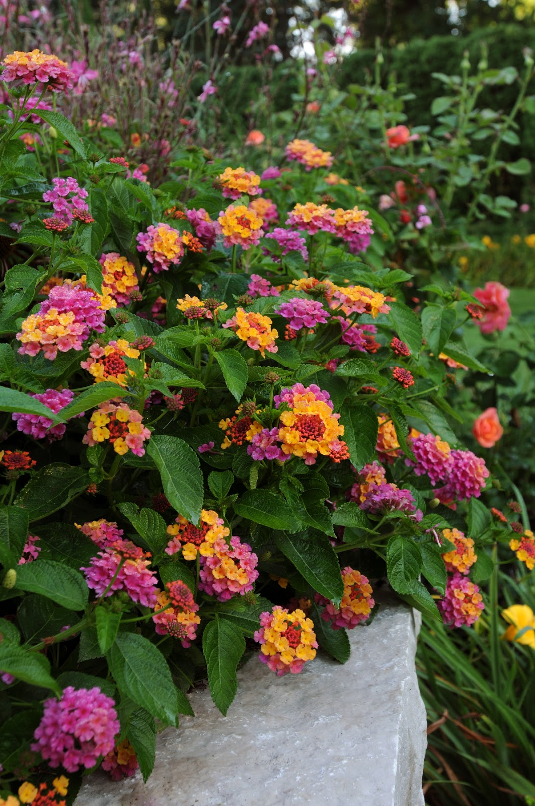 All The Dirt On Gardening Heat Tolerant Plants For The 2013 Summer