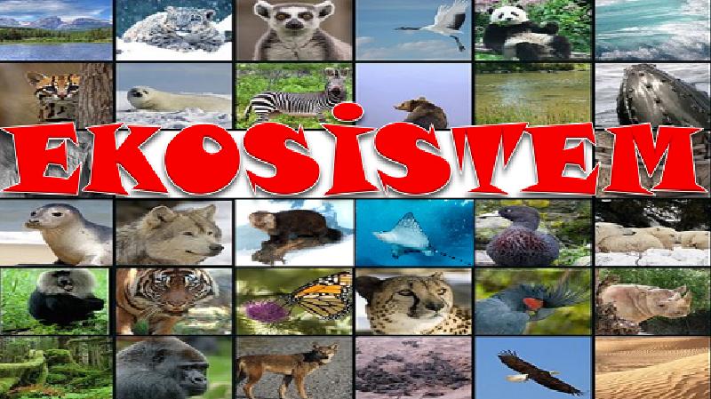 Ekosistem - SUNU | Feyzullah Demir