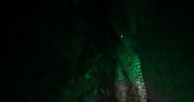 بالصور تفاصيل العثور على ثعبان ضخم بمحطة مترو السادات يثير رعب وزعرالعاملين