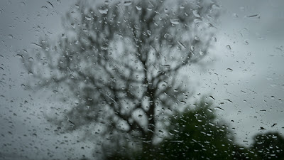 April in May - Tree in Rain, Graham Dew 2013