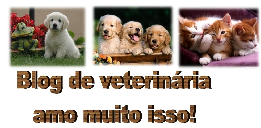 Blog de veterinaria