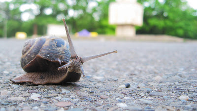 Free Downloads: Earth Day and Make a Snail Garden