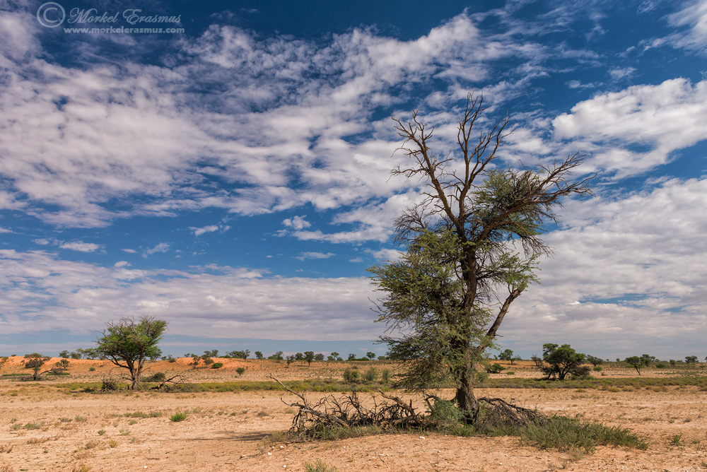 kalahari photography
