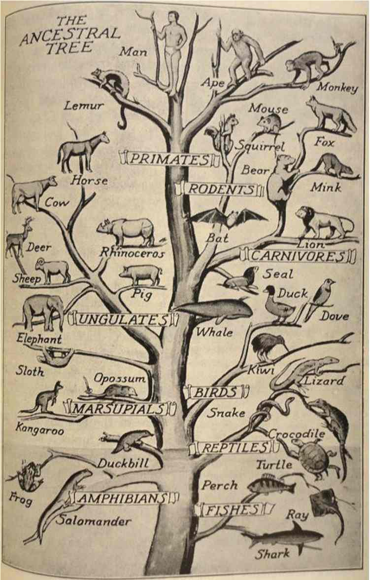 great chain scala naturae essay History of evolutionary thought the scala naturae, or great chain of being thomas henry huxley said in his essay on the reception of on the origin of species.