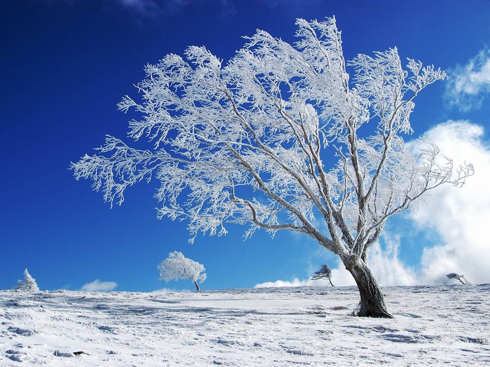 Winter Wallpaper For Desktops