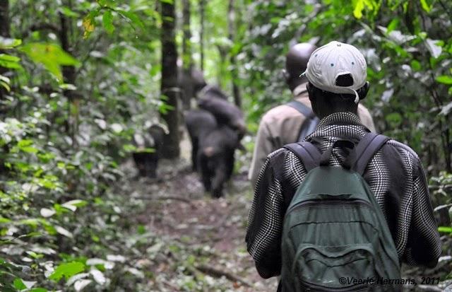 Fieldwork in Uganda, Budongo Forest (2011)