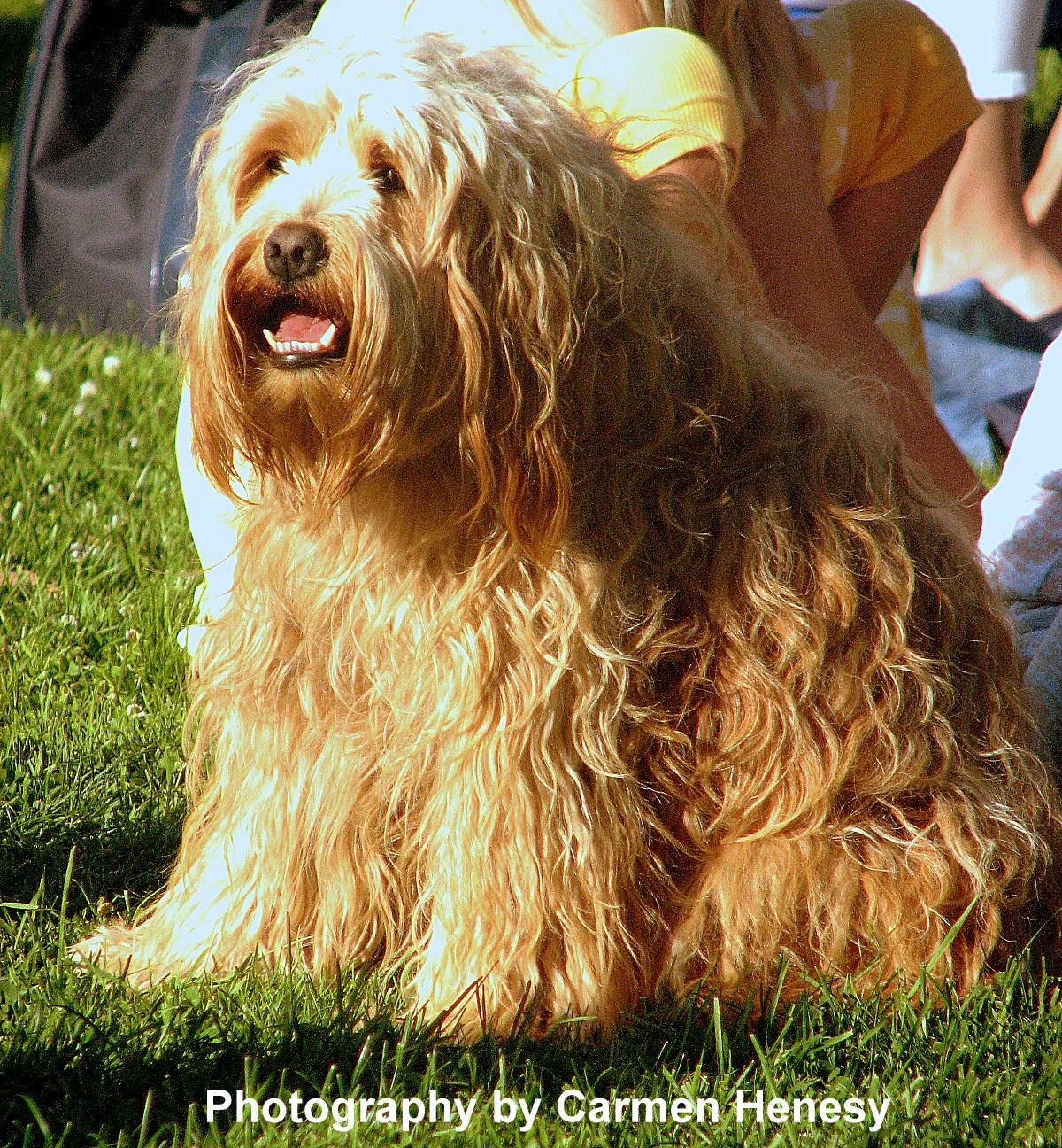 Shaggy Dog Shaggy dog - june 18, 2011