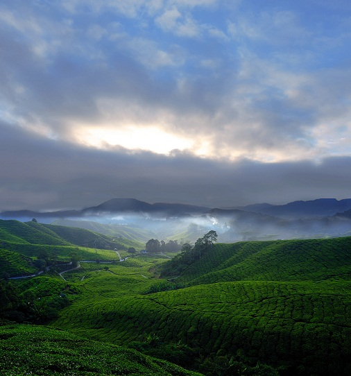 interesting places cameron highlands Cameron highlands is located 136 miles (219 km) north of kuala lumpur in pahang, malaysiacameron highlands is one of malaysia's most popular holiday destinations, situated high above the clouds on a nest of serene mountains.