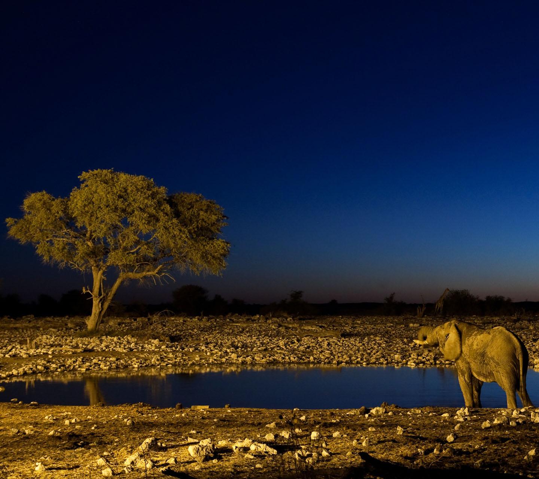 http://3.bp.blogspot.com/-0d-n4bTX8Bo/UFBvvHvp1SI/AAAAAAAAAn8/UODUbX0pNKI/s1600/giraffe-elephant-wallpaper.jpg