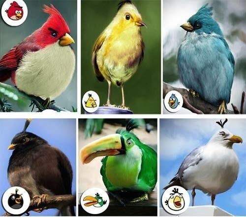 Types In Angry Birds Are Actually Real Birds Have A Look And Enjoy