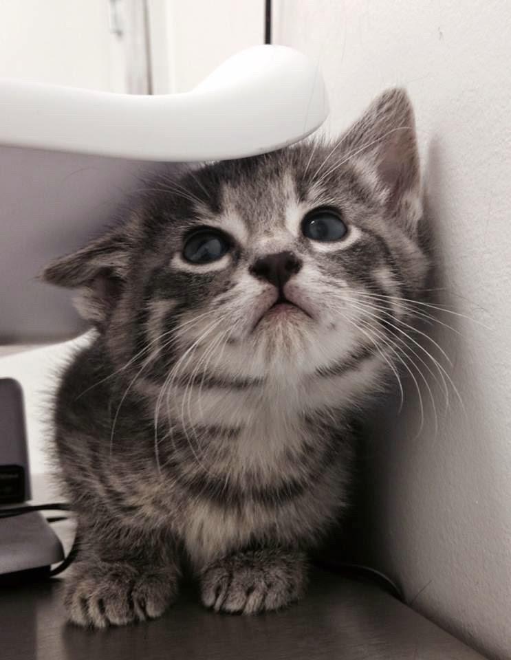 Funny cats - part 151, cute cat photos, best cat pictures