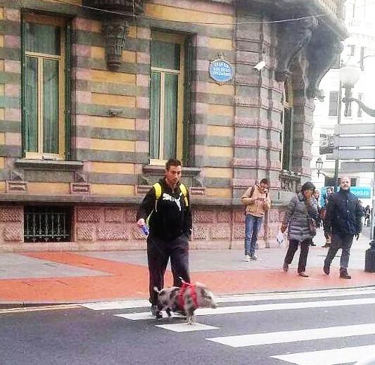 Cerdito,Bilbao,mascota