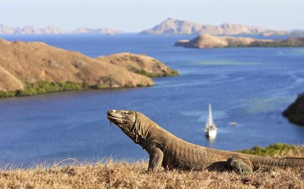 7 Pulau Ini Penghuninya Bukan Manusia