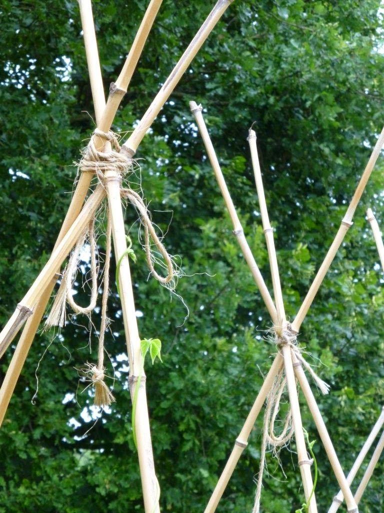 Bonheurdefemme c t tuteurs pour haricots grimpants - Quoi fabriquer avec des bambous ...