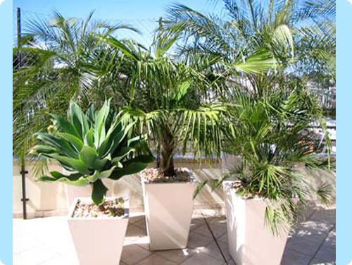 New garden service dicas vasos de plantas for Vaso piscina
