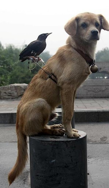 Unusual friendship...