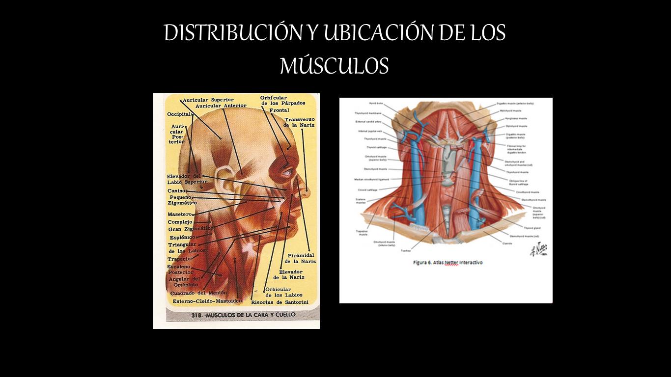 LA ESTRUCTURA DEl AGUA EN SISTEMAS BIOLÓGICOS   Biomedica..?