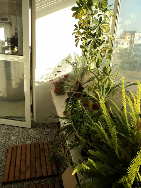 Meeha meeha the winter balcony - Winter flowers for balcony ...