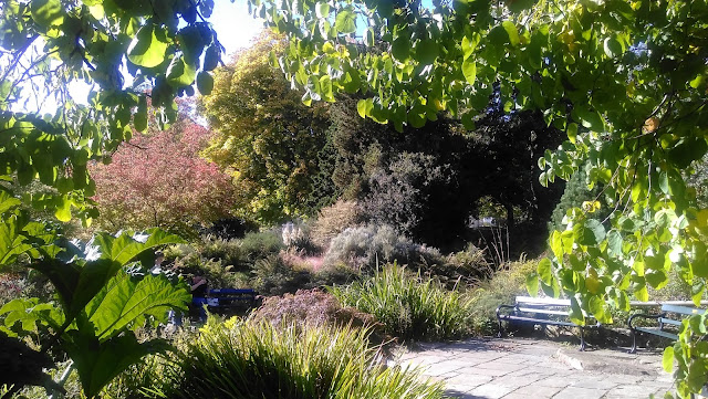 Gwenfar\'s Garden and other musings: October 2015
