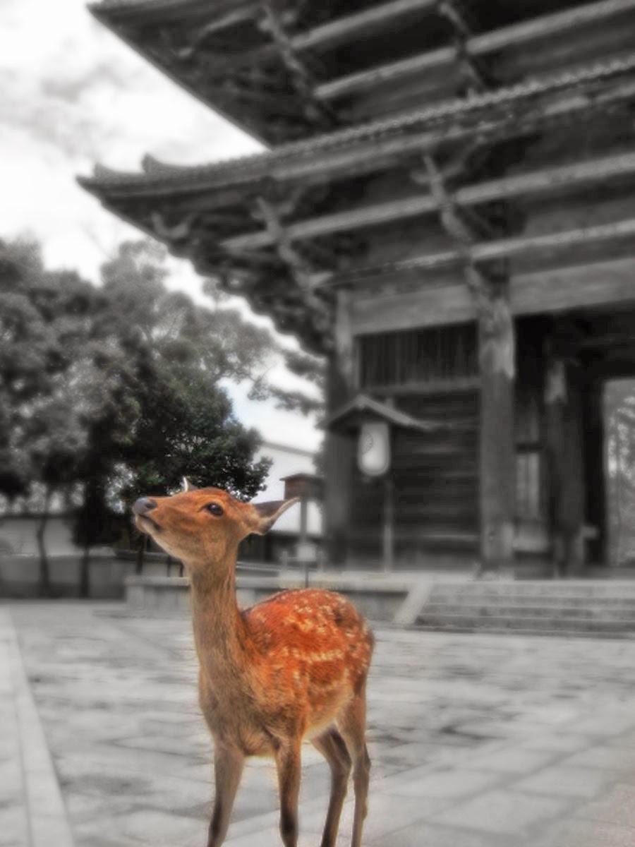 Nara, Japan 2012