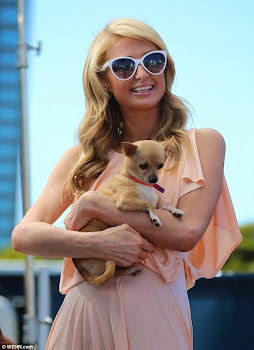 Lucky Dog ?   Paris Hilton and Chihuahia Peter Pan